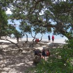 Pohutukawa trees provide plenty of shadow if you're tired of sunbathing