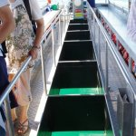Photo of Green Island Cruise - Day Tour (Big Cat Green Island Reef Cruise)
