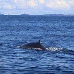 Photo of Auckland Whale & Dolphin Safari