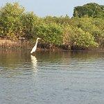 Photo de Pichavaram Mangrove Forest