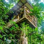 Casa Paraiso treehouse