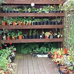 Homegrown plants to buy on the plant shop