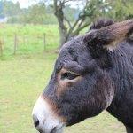 Our wonky donkey, Dakota