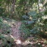 """""""Mountain"""" Trail"""