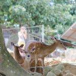 Photo de Paradise Park Farm