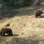 Photo of Tier-Freigelande - Nationalpark Bayerischer Wald