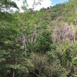 Photo of Rainforest Adventures