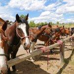 Equestrian Center for Western Horseback Riding