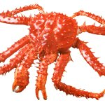 All You Can eat King Crab Buffet, every Friday and Saturday throughout the summer months!