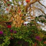 Photo de Villa Pomme d'Amour