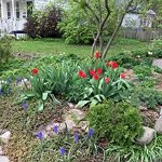 The front garden is gorgeous in the spring