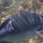 Underwater pic of fish taken snorkeling at beach down hill from HBR