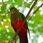 Wildlife Jamieson Caravan Park, many birds call the park their home