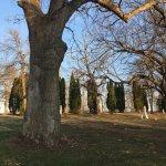 """Galena cemetery's """"evil tree"""""""