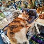 Artesanía (y la vida del gato porteño)