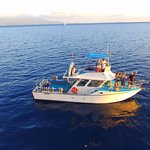 Scuba Diving, Snorkeling, Whale Watches and Private Parties!