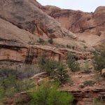 Negro Bill Canyon Trail Foto