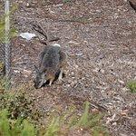 Photo of Kangaroo Island Adventure Tours
