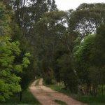 Driveway to the Vineyard accommodation