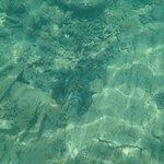 Snorkelling Million Dollar Bay