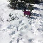 Enjoying dog mountain!