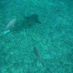 Snorkelling at Mexico Rocks