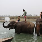 Elephant bathing @ island jungle resort