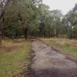 A bush track with seat