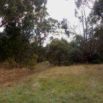 A rougher bush track