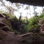 Waipu Caves Track