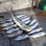 Photo of Sailfishbay Surf and Big Game Fishing Lodge