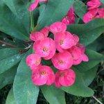 #OKEPhotoContest Nature, Flora & Fauna