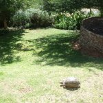Private garden and boma at the Cottage