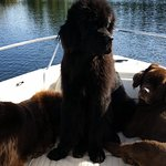 Water dogs!