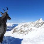 Top Mountain Star Foto