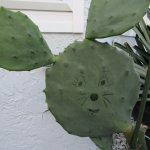 Our 'Mickey' cactus...in our court-yard (Always at the pizza parties!)