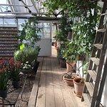 Foto di Rosendals Garden