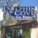 Photo de Dolphin Cove