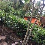 Photo of Handunugoda Tea Estate