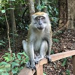 Spotted a monkey