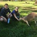 Feeding kangaroos at Cleland Conservation Pk! Free admission/ VIP entry (no waiting) part of tou