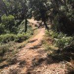 Part of the Mt Lofty Descents trail. Exquisite!!