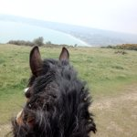 Downland ride, looking out to swanage bay
