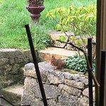 Léon, l'écureuil des lieux très à l'aise dans son jardin...