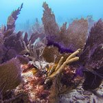 Wide variety of coral