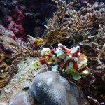 Photo of Cebu Dive Centre