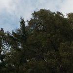 Photo of Reserva Natural de Merlo