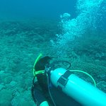 Blue Marlin Dive Gili Trawangan Picture