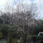 花が咲いていました。桜かな?