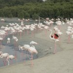 Upclose With the Flamingos